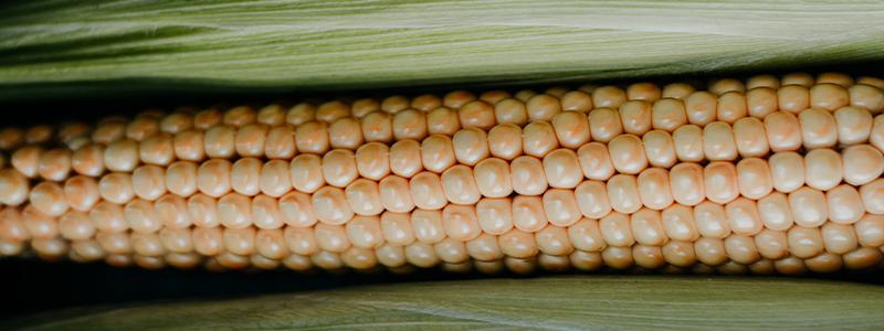 Kikok – das ganz besondere Maishähnchen
